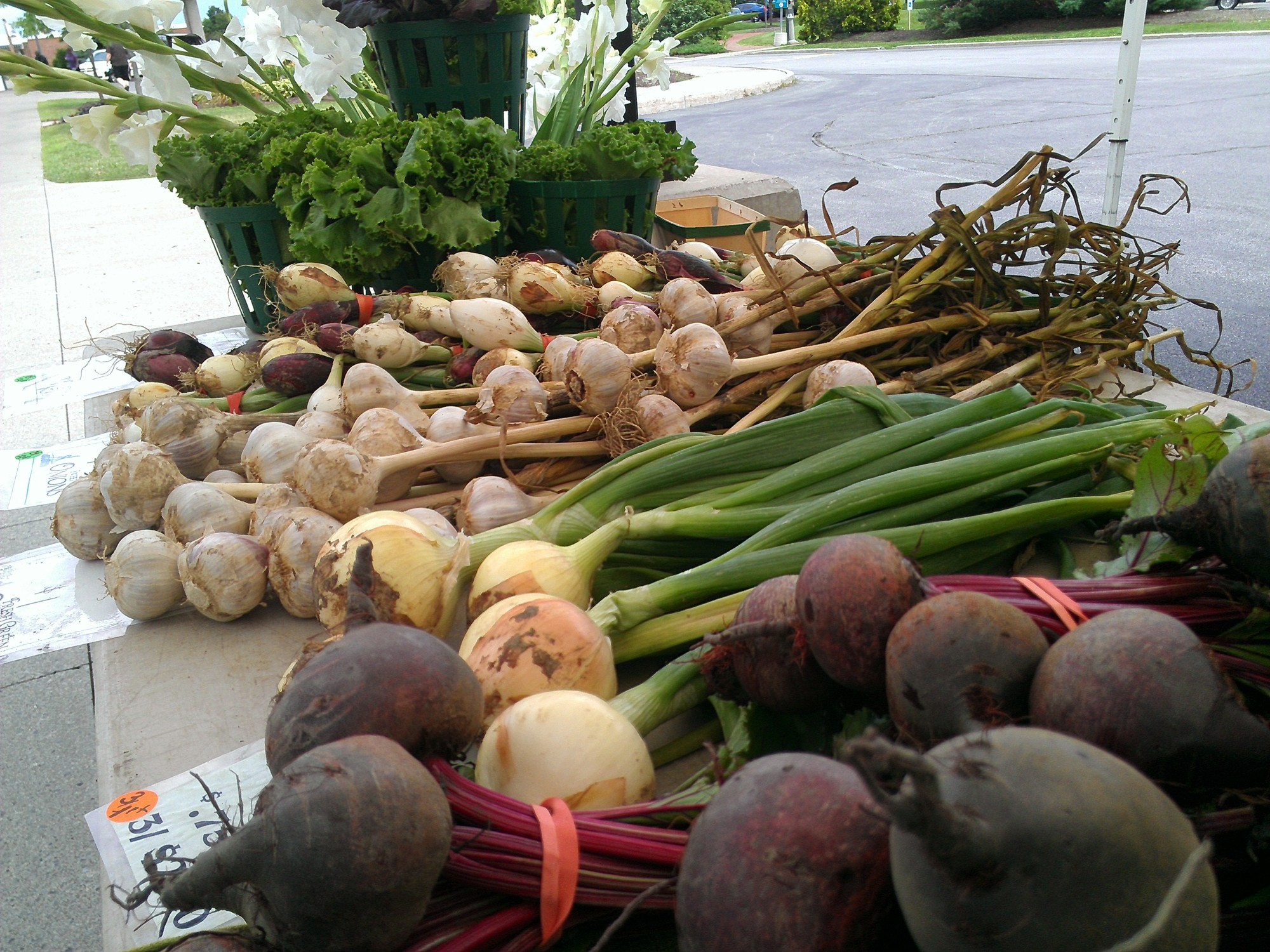 Fisher Hill Farm CSA