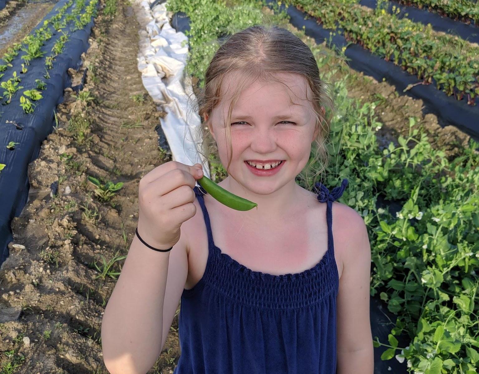 Fisher Hill Farm Local Peas