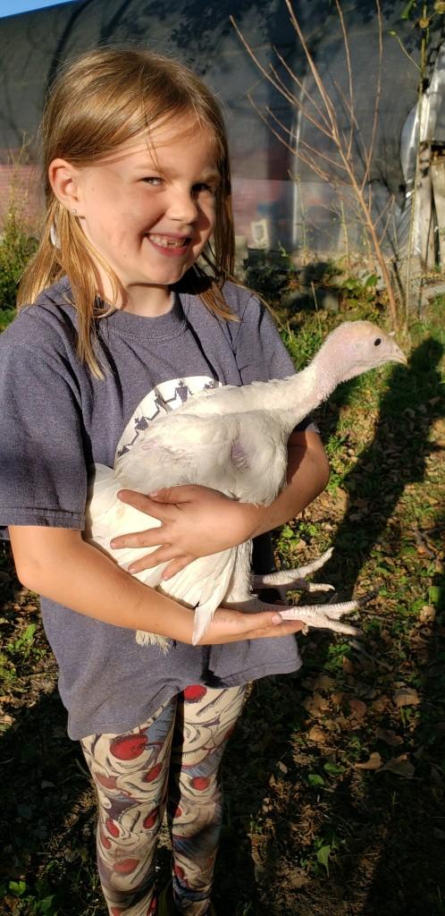 Fisher Hill Farm - Thanksgiving Turkey